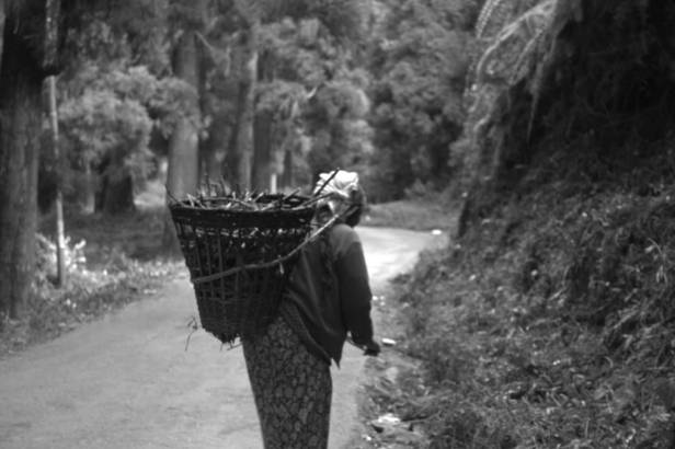 The woman who refused my camera on her way home after collecting firewood. Somewhere near Dowhill, Kurseong, 2018